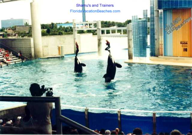 Sea World Orlando Shamu Jump with Trainer