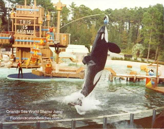 Sea World Orlando Shamu Jump - Florida Vacation Attraction